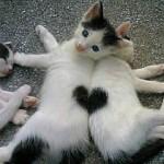 Mange sjove katte på billeder og video