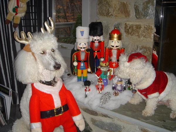 hund modeller brothel østerbro