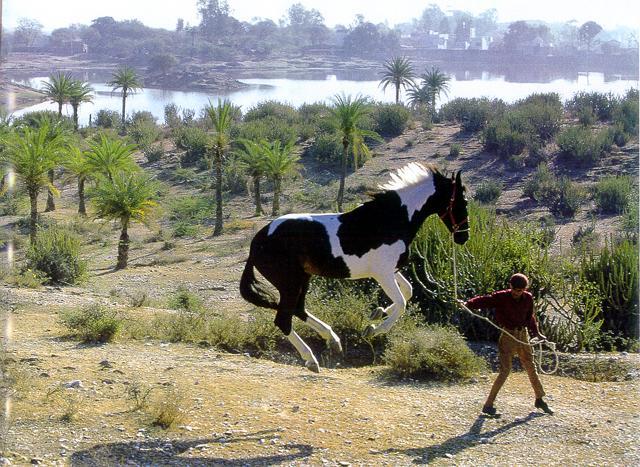 Svævende hest - et sjovt billede på - Sjove-billeder.dk